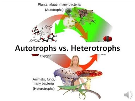 Chemosynthesis - Definition, Equation & Quiz Biology